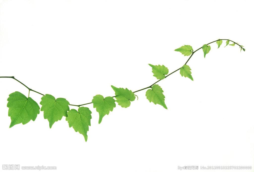 Indoor Vines And Climbers You Can Grow