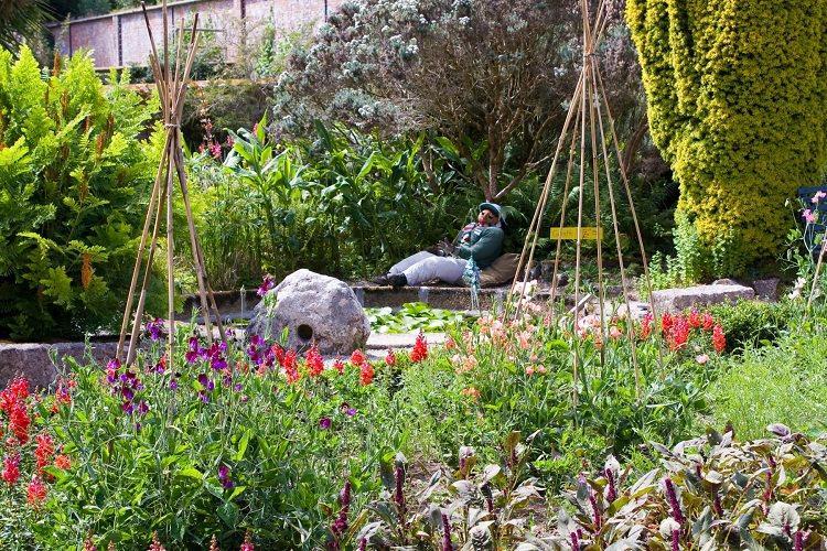 Easy Landscaping Tips For A Low Maintenance Garden Carol 绿手指 最专业的养花app