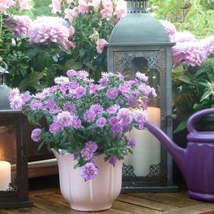 7 Apartment Herb Garden Tips