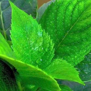 Clasificación de las hojas: tipos de hojas según su nervadura