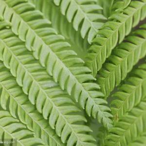 Clasificación de las hojas (continuación)