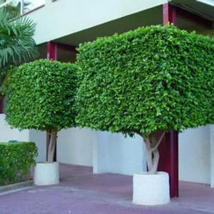 Tipos de poda para un árbol