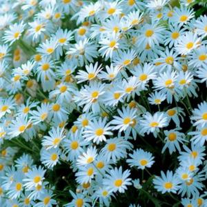Beautiful plants—Mito enjoy