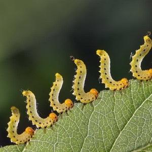 让害虫产生抗药性的原因与解决措施
