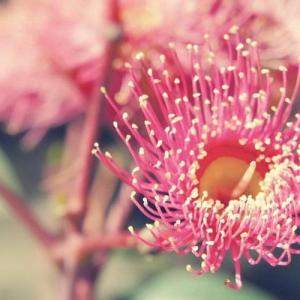 15个花卉拍摄必学技巧