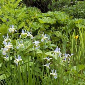 Excessive Rain On Plants: How To Garden In Wet Ground