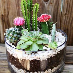 Keep Pests Off Cacti and Succulents