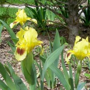 Iris Companion Plants | Gardener's Guide on Companion Plants for Iris