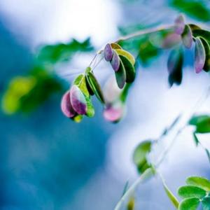 Green leaves—Mito enjoy