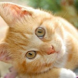 Gatos: evitar los problemas en el jardín