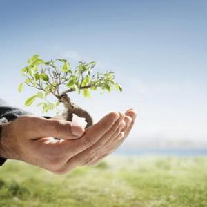 Riega tu árbol