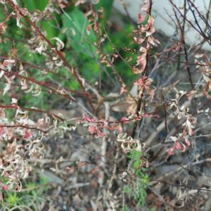 Effects Of Defoliation – What To Do For Defoliated Plants In The Garden
