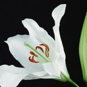 Homemade Fertilizer for Peace Lilies