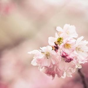 Little flower—Mito enjoy