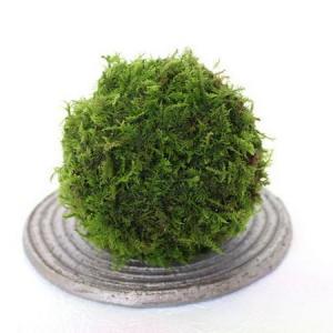 How to Propagate Moss Balls
