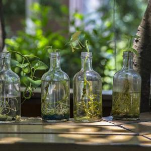 5种环保的驱虫防病小妙招
