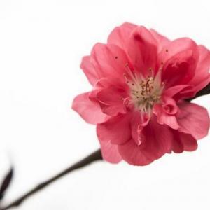 简单4招花卉摄影用光技巧