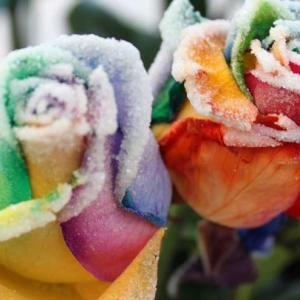 怎样让鲜花改变颜色