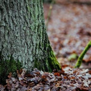森林里植物的特写图片