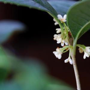 体弱多病还要花开朵朵,你莫要鞠躬尽瘁了哟