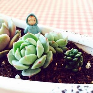 My little garden of Succulents