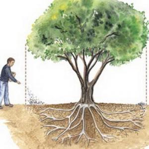 Cómo abonar los árboles