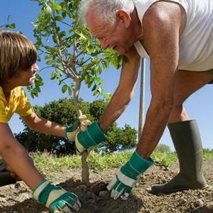 Trasplante de latifoliadas caducas y perennes