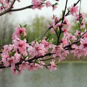 Spring Garden Prep Checklist