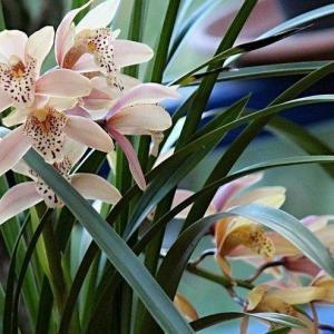 花卉摄影的十个要点