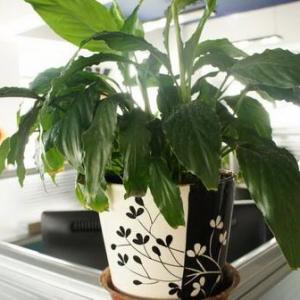 怎样更好的用绿植来装点我们的办公室