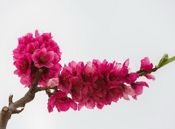 花和人一样,不仅有正名,而且还有雅号。