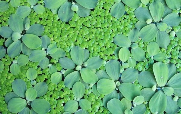 一起来深入了解一下水生植物