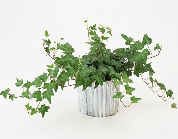 """以下盆栽可以缓解浴室的""""臭""""""""湿""""""""闷"""""""