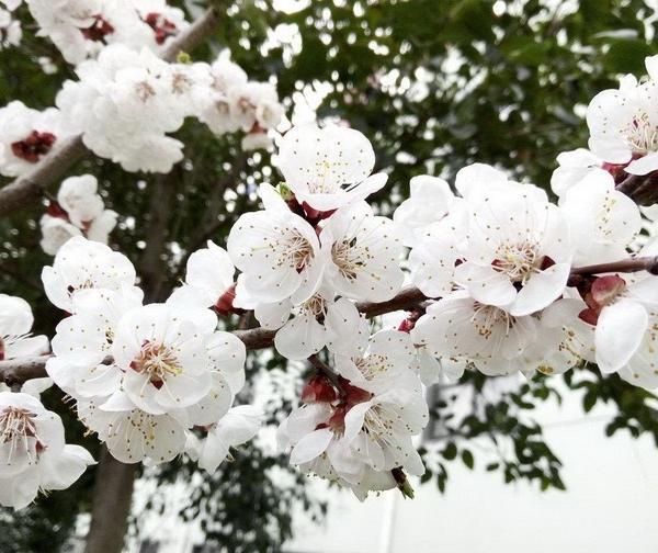 历史四大美女与花的缘分