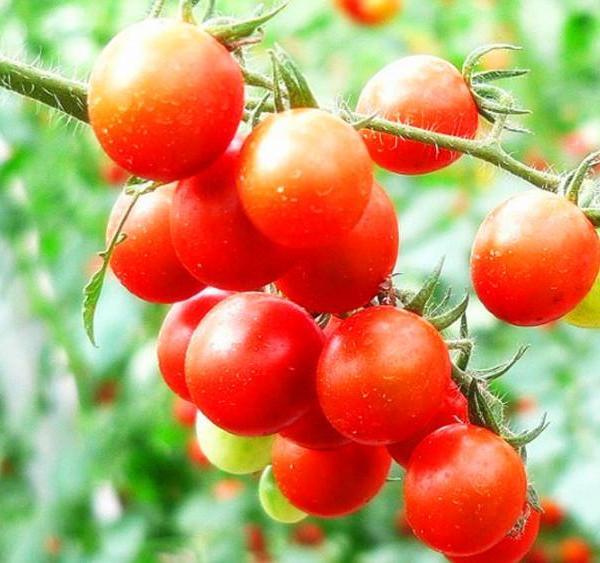 Growing Tomatoes in Hanging Basket: Vertical Gardening