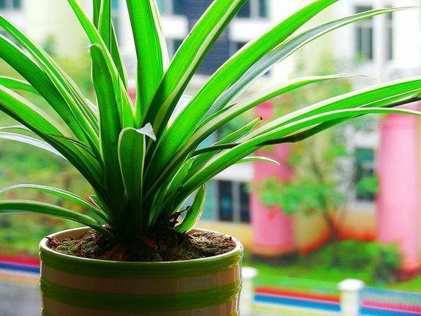 什么植物适合摆放在儿童房间呢?