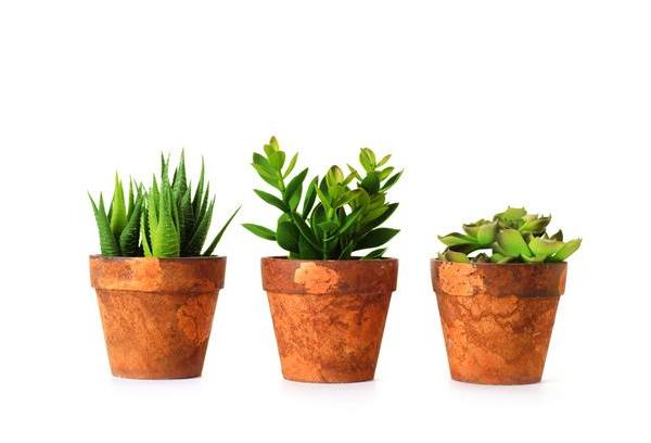 19 Best Low Maintenance Houseplants