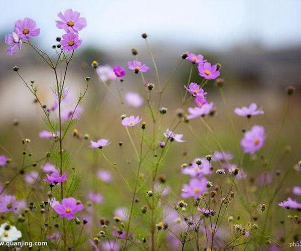 花卉题材的拍摄问题全面解读