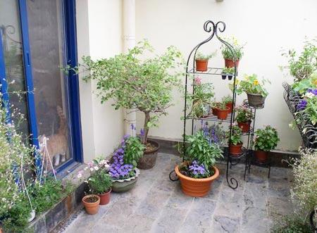 Patio and Balcony Planter Ideas