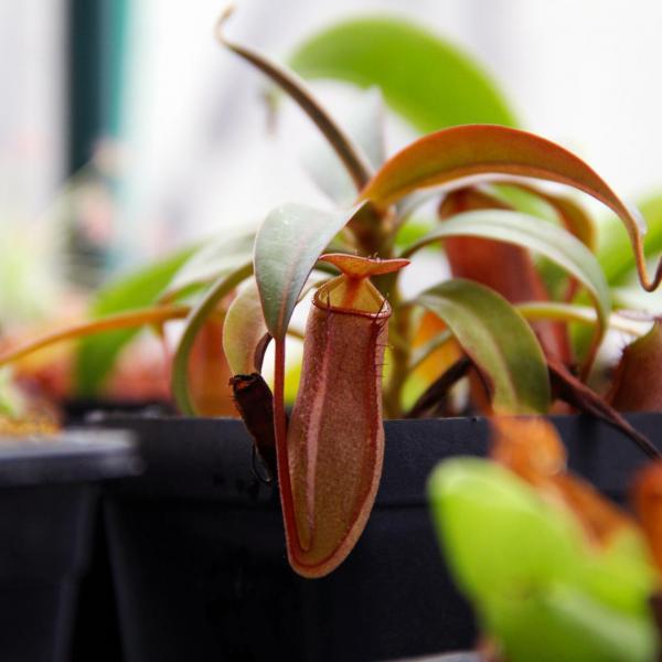 如何让食虫植物适应环境?