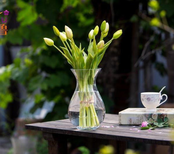 简单轻松水培百合竹的方法
