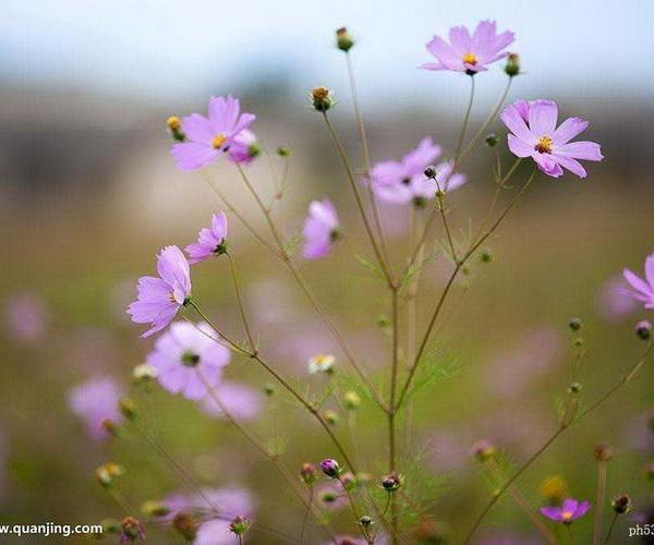 简单6招拍出不一样的花卉照片