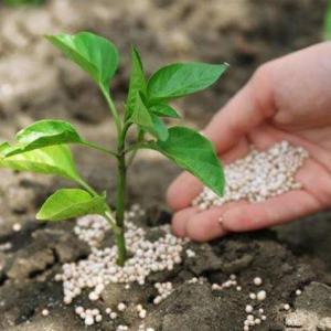 肥料三要素对盆栽花卉起什么作用
