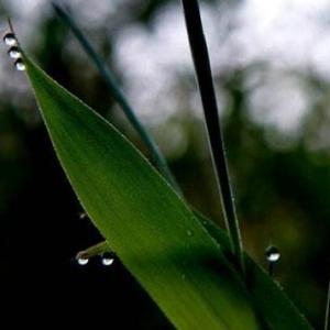 植物趣闻|你知道吗?植物也会流汗