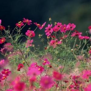 室内盆栽花卉如何选购:住所朝向环境,个人喜好