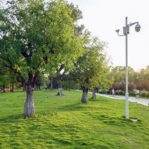 草坪类病害:草坪黑痣病