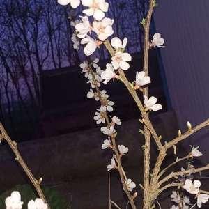 这是什么花啊?