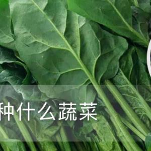 冬天适合种什么蔬菜