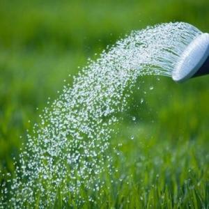 植物浇水方法:切勿浇水过多