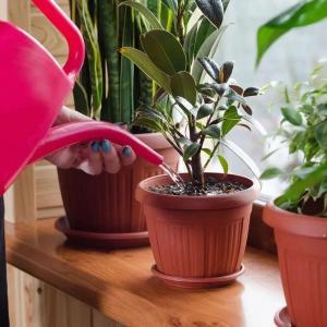 怎样给盆花浇水:品种不同,阶段不同,方法不同